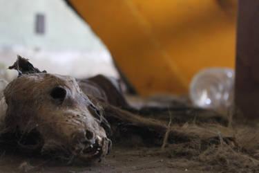 Dead Dog by TobyWoby36