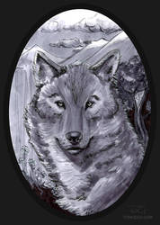 Wolf by tomcech