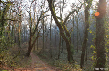 Geres Forest by kosmipt