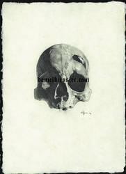 skull 02 by Daniel-Kiessler