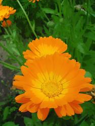 Orange Flower by uniquelycat
