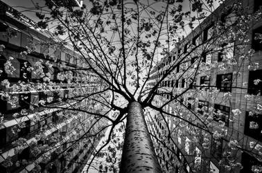 San Francisco, Tree of Duo by alierturk