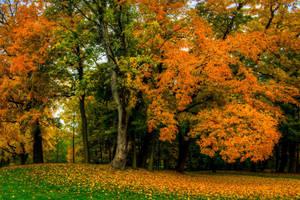 Munich, walk in Englischer Garten II by alierturk