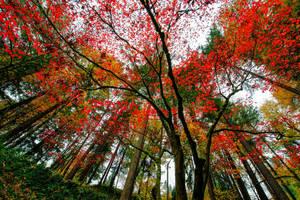 Portland, colors of fall by alierturk
