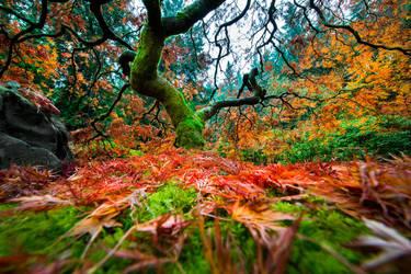 Portland, Japanese Garden fall by alierturk
