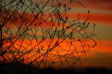 Nature's Filigree by MissOddity