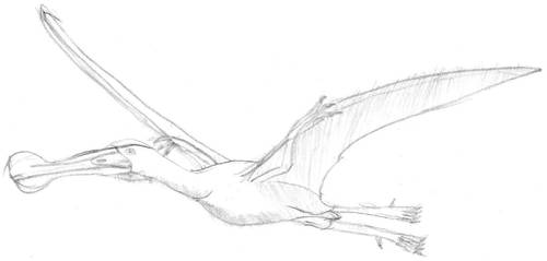 Cryorhynchus sketch by Kirillus