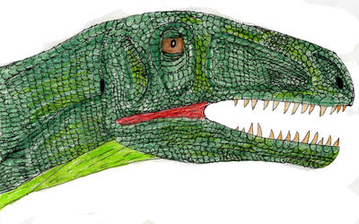 New Undescribed Basal Theropod by Kirillus