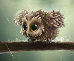 Little Owl by Foxeaf