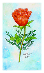 :: Red Rose :: Watercolour by maritery-san