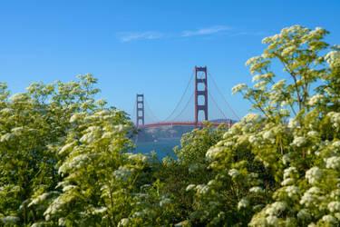 Lost in San Francisco by SielojRamu