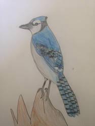 Blue Jay by KingOli1999