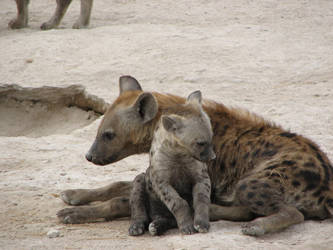hyena family 2 by sinekotdiabl