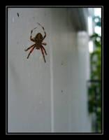 Arachne by zephyrofgod