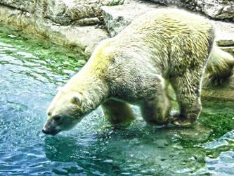 Polar Bear HDR by skalin