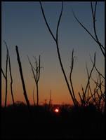 Sunset by littledubbs