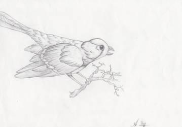 bird by UKpotato
