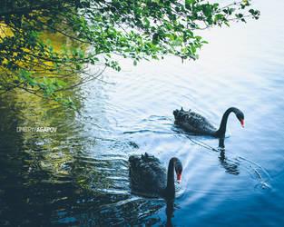 black swan by agapovd