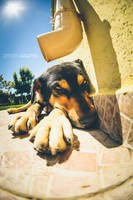 sunny dog by agapovd