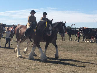 Ridden Clydesdales by Louvan
