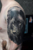Wolf cover by Olggah