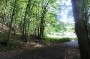 Forest 3 by GamesHarder