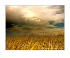 The Rice Field by vuhoangphuong