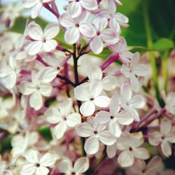 Flowers by NinulyaKVN