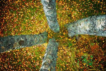 Autumn Trees by Heimstrekka