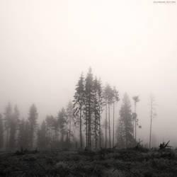 Misty Trees by calleartmark