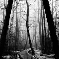 Winter Mist by calleartmark