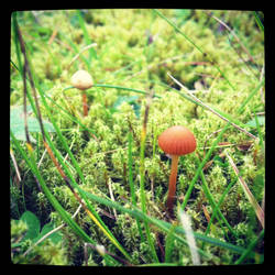Mushroom on moss by okonik