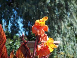 The flower I believe by Wintergreenmints