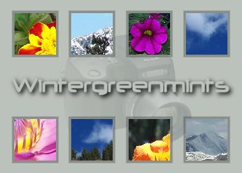 Wintergreenmints's Profile Picture