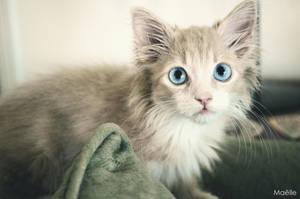 Baby cat. by CasseNoisette