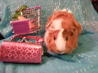 Guinea Shopping by KatiesCreations