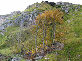 Autumn on the Little Orme by MakinMagic