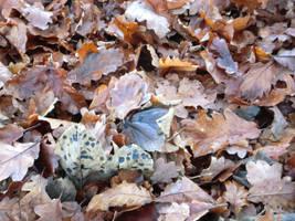 Leaf spotting by MakinMagic