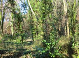 Bryn Euryn woods by MakinMagic