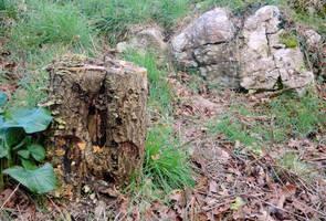 Stump and Stone by MakinMagic