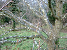 The Lichen Tree by MakinMagic