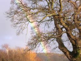 Rainbow (right) by MakinMagic
