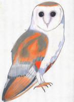 Barn Owl by EnigmaticEpidemic
