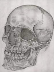 Skull Sketch by JSA1812