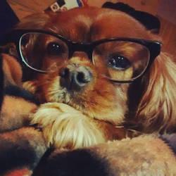 Glasses on Ruby by JSA1812