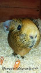 Truffles (rip) by Bunnygirlphotography