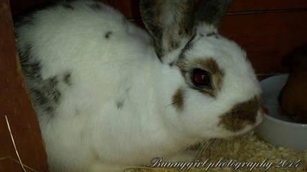 Baby rabbit born 23/1/14 by Bunnygirlphotography