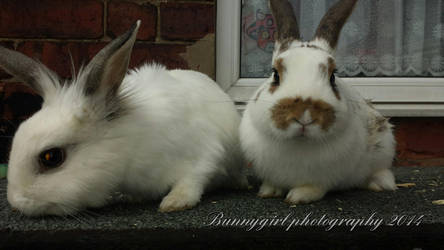 Frosty (rip) and son born 23/1/14 by Bunnygirlphotography