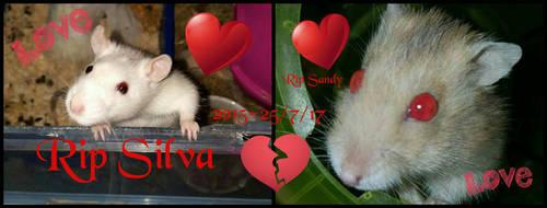 RIP Silva and sandy by Bunnygirlphotography