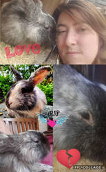 RIP Harvey 4/8/2012-21/9/2017 by Bunnygirlphotography